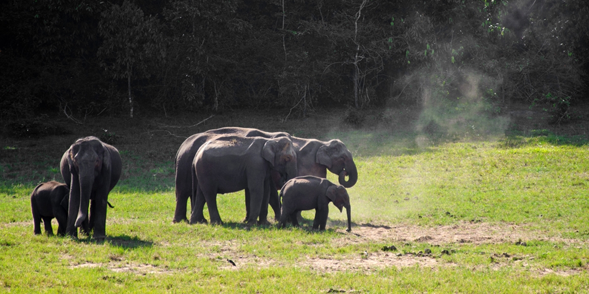 Wildlife Sanctuary in Thekkady